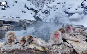 Jigokudani-Monkey-Park-Yamanouchi-Japan-2012