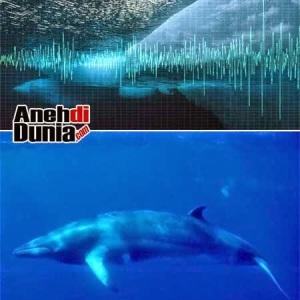 suara-misteri-bawah-laut